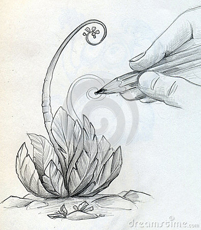 Drawing a sketch of a plant
