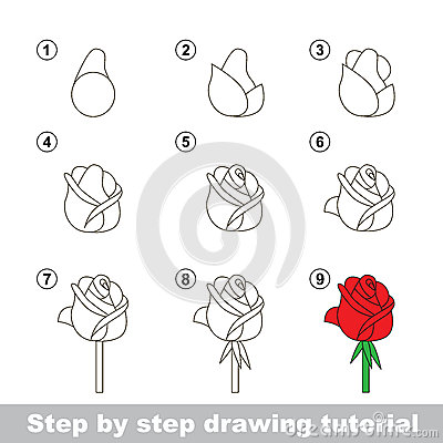 Drawing Tutorial. How To Draw A Rose Stock Vector - Image: 68325112