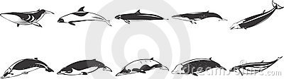 Drawings of Fish & Dolphins