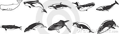 Drawings of whales