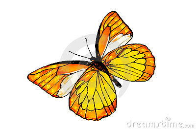 The drawn butterfly.