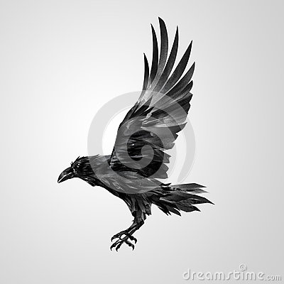 Free Drawn Realistic Flying Isolated Crow Stock Photo - 91890300