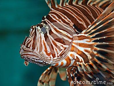 Dreadful fish