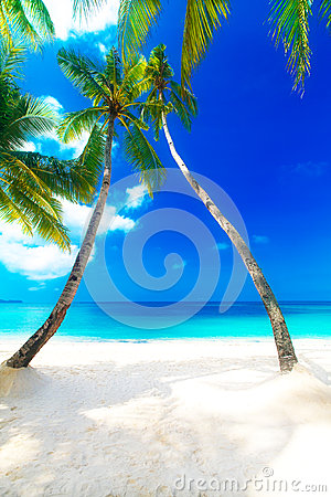 Free Dream Scene. Beautiful Palm Tree Over White Sand Beach. Summer N Royalty Free Stock Images - 43615389