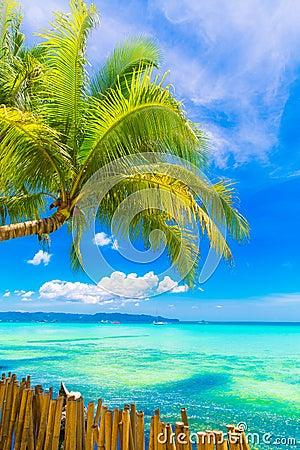 Free Dream Scene. Beautiful Palm Tree Over White Sand Beach. Summer N Royalty Free Stock Photos - 53545958