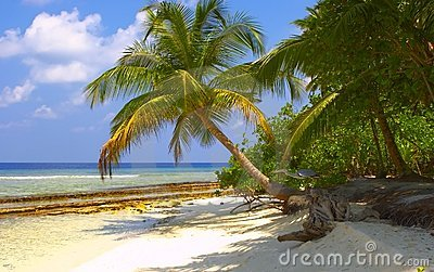 Dream Tropical Beach with Palm Trees and Bird