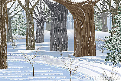 Dream winter forest