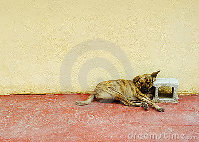 Dreamer Dog B1