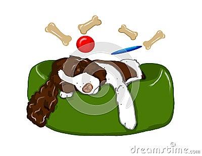 Dreaming Springer Spaniel