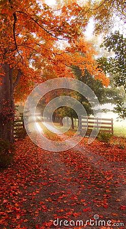 Dreamy Autumn Road