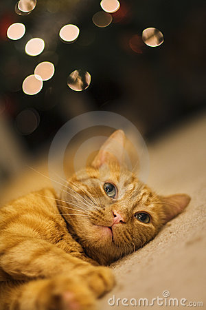 Free Dreamy Cat Christmas Lights Royalty Free Stock Photography - 7494327