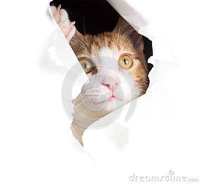 Dreamy Cat Looks Through A Hole In Paper Stock Photo ...