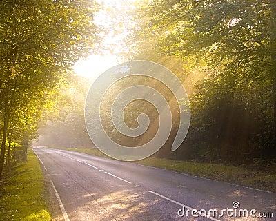 Dreamy forest road. Dawn or Dusk.