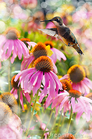 Dreamy image of a Hummingbird feeding