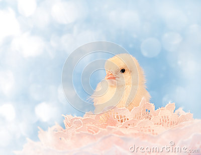 Dreamy image of a tiny Easter chick resting in pin