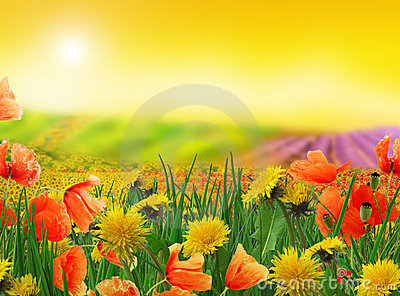 Dreamy landscape - fields and meadows