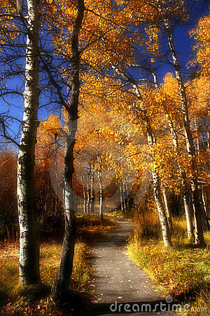Dreamy Path through Aspen