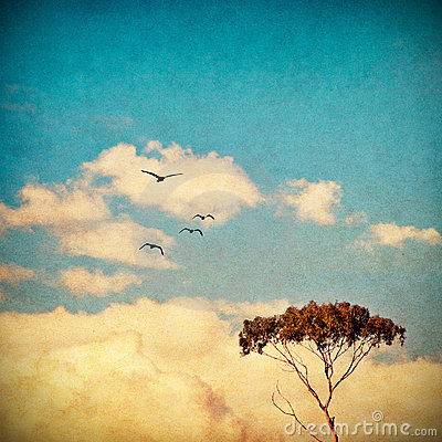 Free Dreamy Sky And Tree Stock Photos - 11628523