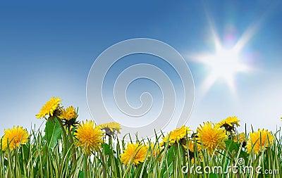 Dreamy spring meadow full of dandelions