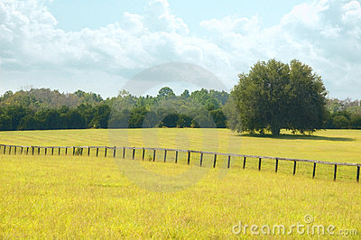 Dreamy summer pasture.