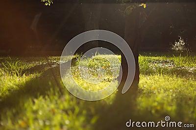 Dreamy sunny lawn