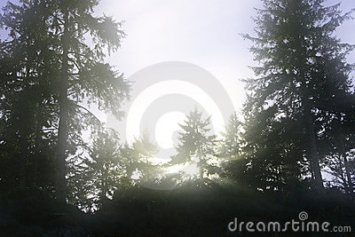 Dreamy trees