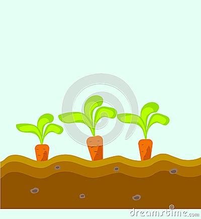Drei karotten wachsen im boden vektor abbildung bild for Boden clipart