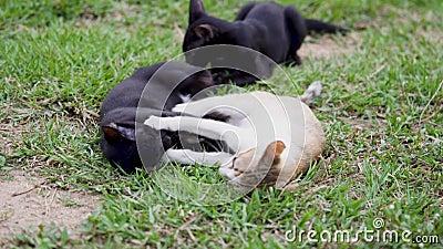 Drei Katzen spielen auf dem Rasen stock video