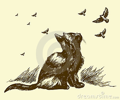 Drenaje del gato y de los pájaros