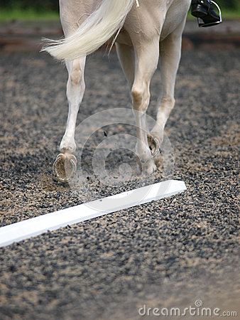 Dressage Abstract