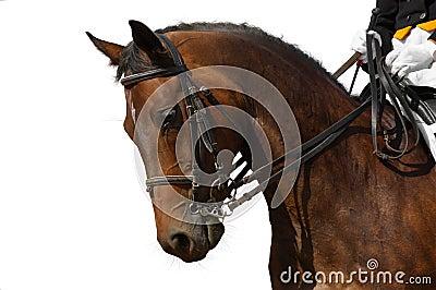 Dressage, bay horse