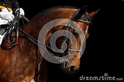 Dressage, caballo de bahía
