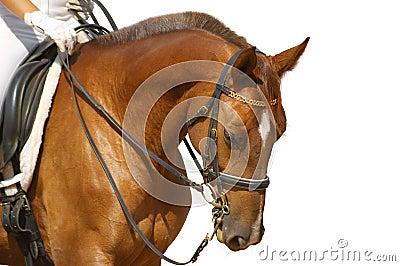 Dressage, caballo del alazán