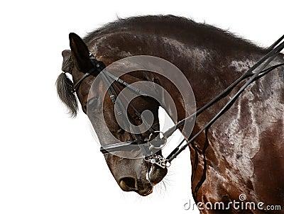 Dressage, caballo negro