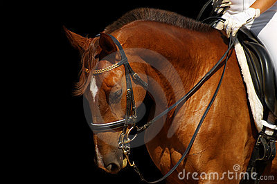 Dressage, cavalo do sorrel