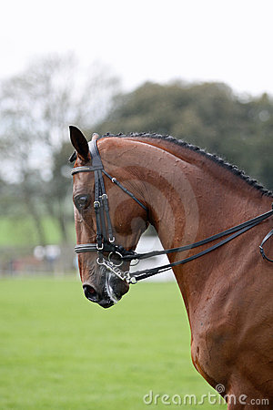Dressage de cheval de compartiment
