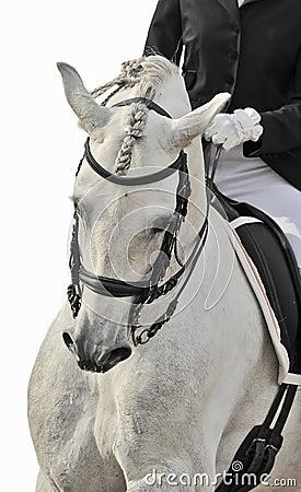 Dressage do cavalo branco