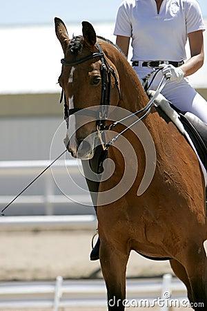 Dressage/Equestrian Rider #1