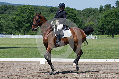 Dressage FEI Prix St. Georges Editorial Image