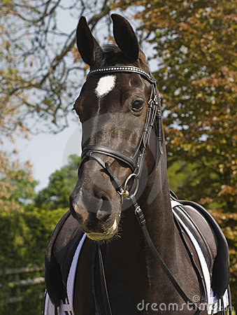 Free Dressage Horse Royalty Free Stock Images - 19421019