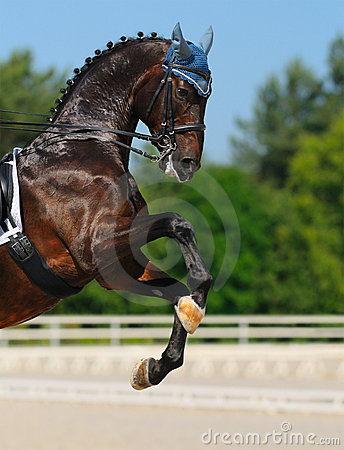 Dressage: horse rear