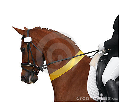 Dressage Horse with Yellow Ribbon