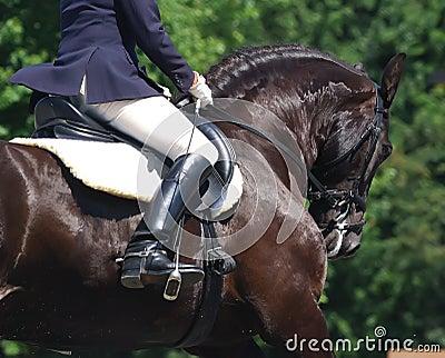 Dressage koń