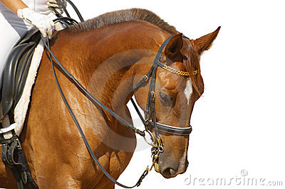 Dressage konia kobylak