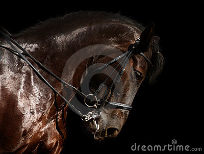 Dressage, schwarzes Pferd