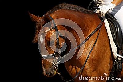 Dressage, sorrel horse