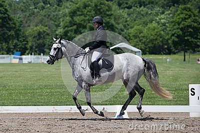Dressage USEF Training Level Test 2 Editorial Stock Photo
