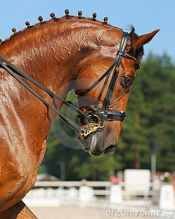 Dressage : verticale de cheval d oseille
