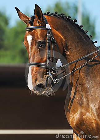 Dressage : verticale de cheval de compartiment