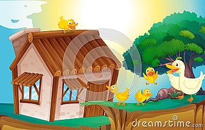 Drewniany dom i kaczki